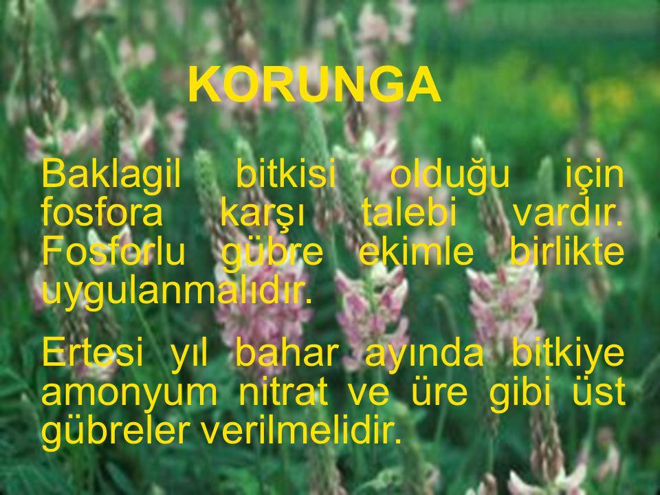 KORUNGA Baklagil bitkisi olduğu için fosfora karşı talebi vardır. Fosforlu gübre ekimle birlikte uygulanmalıdır. Ertesi yıl bahar ayında bitkiye amony