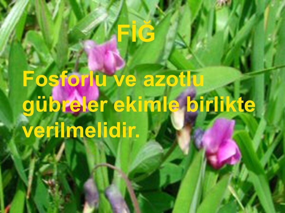 FİĞ Fosforlu ve azotlu gübreler ekimle birlikte verilmelidir.