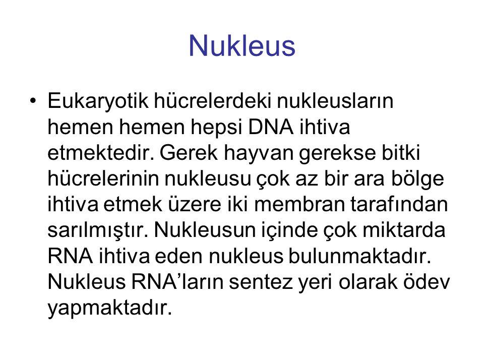 Nukleus Eukaryotik hücrelerdeki nukleusların hemen hemen hepsi DNA ihtiva etmektedir. Gerek hayvan gerekse bitki hücrelerinin nukleusu çok az bir ara