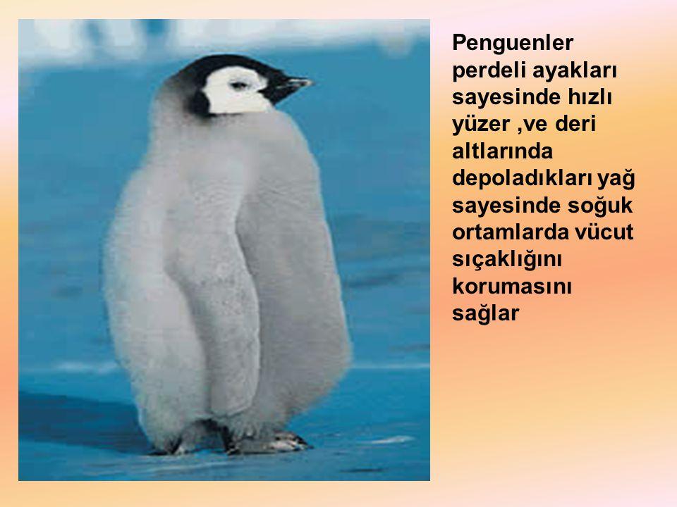 Penguenler perdeli ayakları sayesinde hızlı yüzer,ve deri altlarında depoladıkları yağ sayesinde soğuk ortamlarda vücut sıçaklığını korumasını sağlar