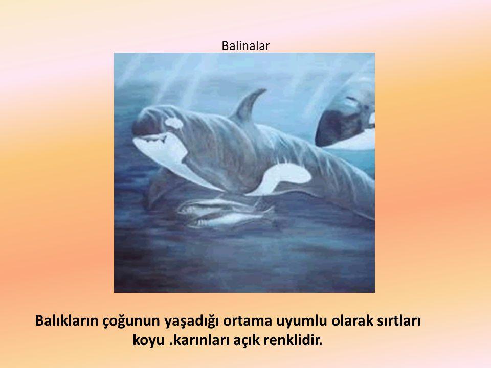 Balinalar Balıkların çoğunun yaşadığı ortama uyumlu olarak sırtları koyu.karınları açık renklidir.