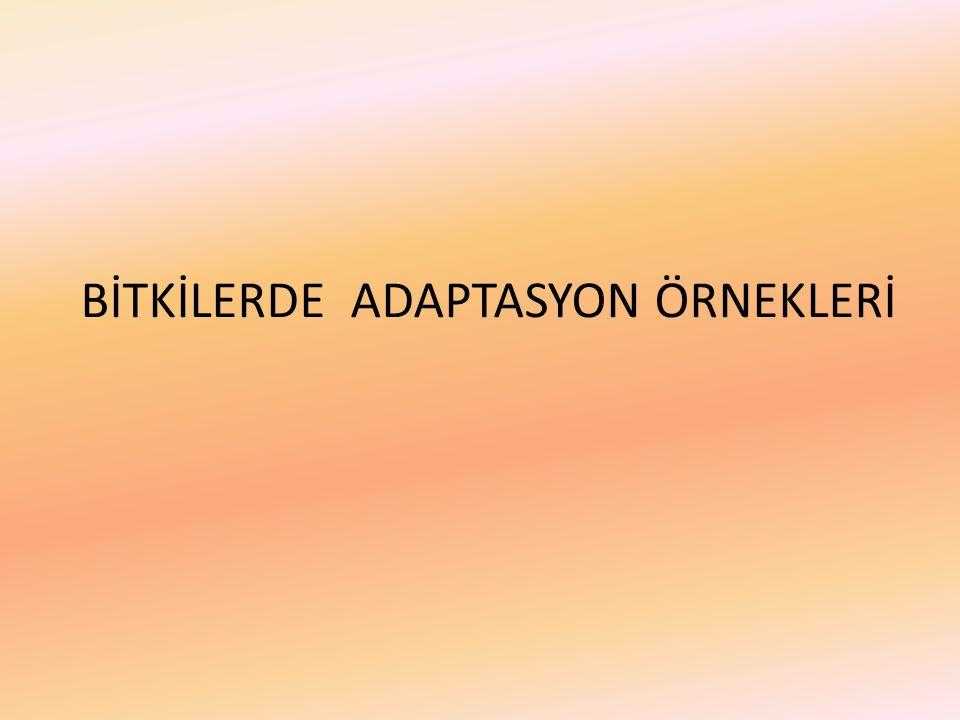 BİTKİLERDE ADAPTASYON ÖRNEKLERİ