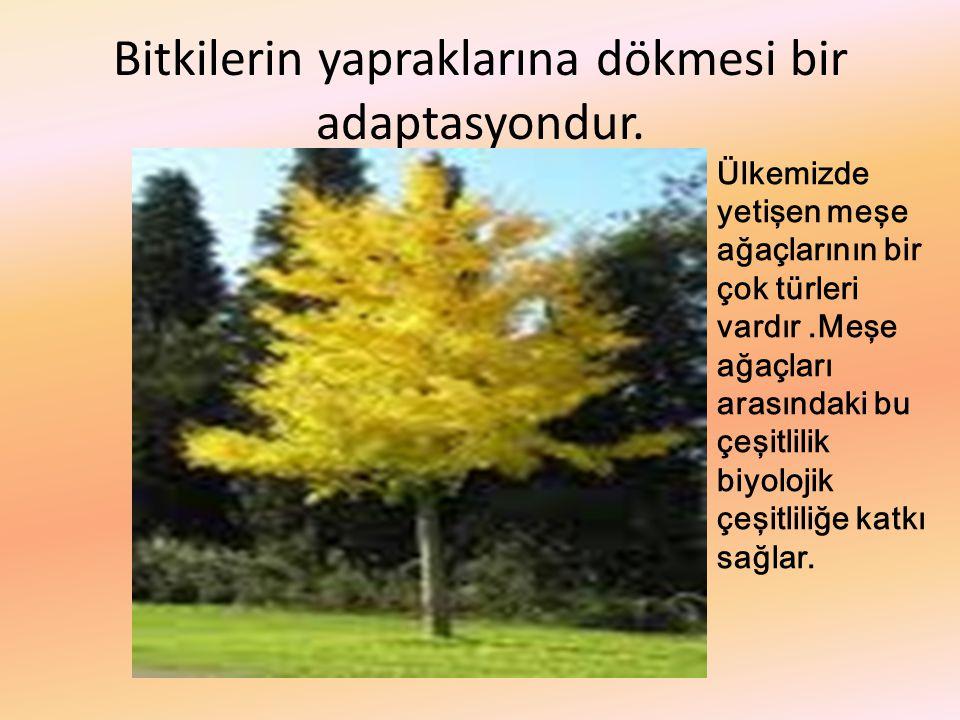 Bitkilerin yapraklarına dökmesi bir adaptasyondur. Ülkemizde yetişen meşe ağaçlarının bir çok türleri vardır.Meşe ağaçları arasındaki bu çeşitlilik bi