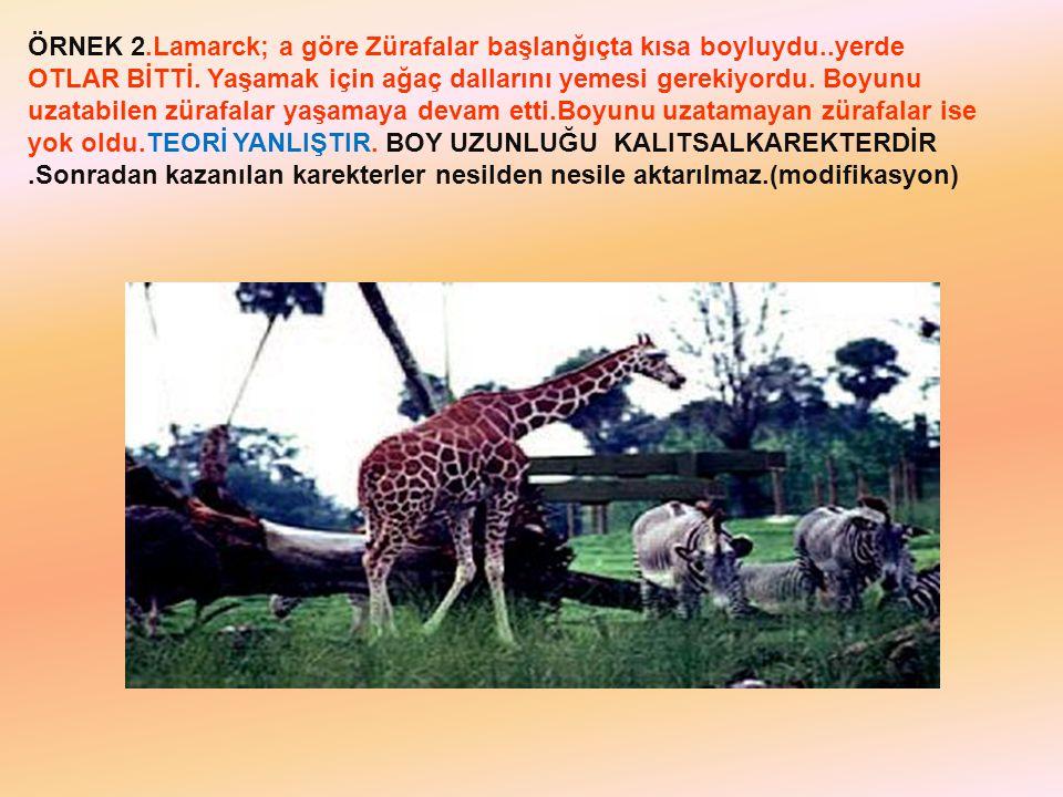ÖRNEK 2.Lamarck; a göre Zürafalar başlanğıçta kısa boyluydu..yerde OTLAR BİTTİ. Yaşamak için ağaç dallarını yemesi gerekiyordu. Boyunu uzatabilen züra