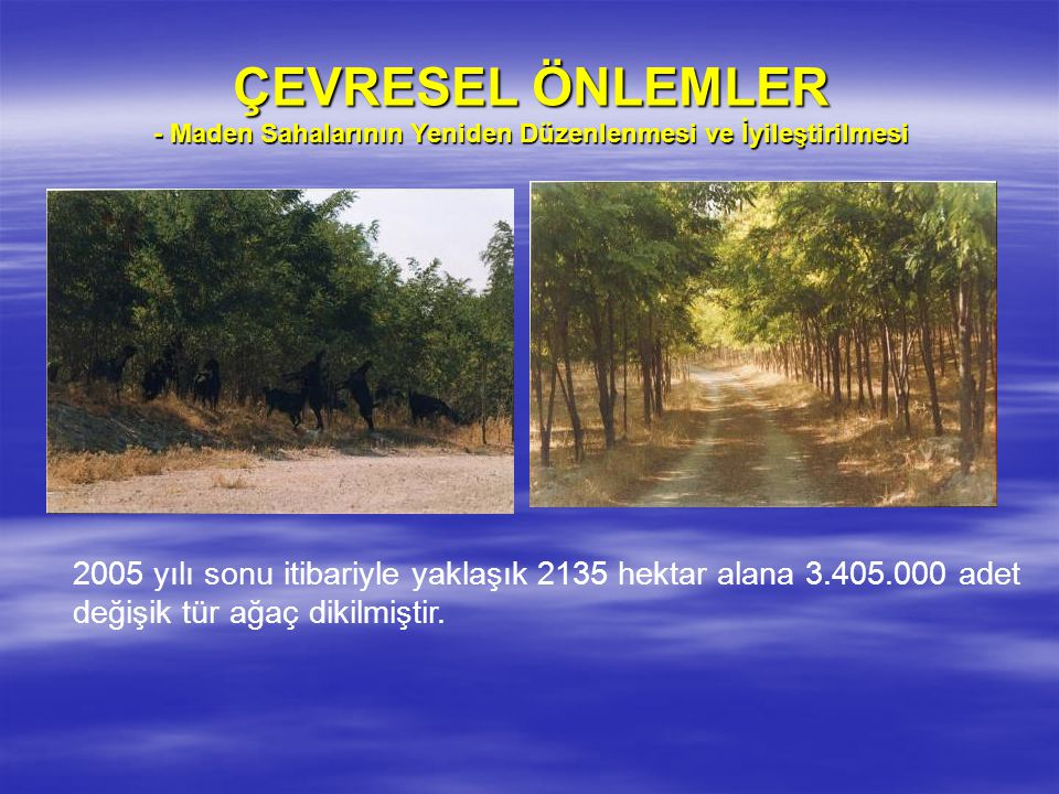 ÇEVRESEL ÖNLEMLER - Maden Sahalarının Yeniden Düzenlenmesi ve İyileştirilmesi 2005 yılı sonu itibariyle yaklaşık 2135 hektar alana 3.405.000 adet değişik tür ağaç dikilmiştir.