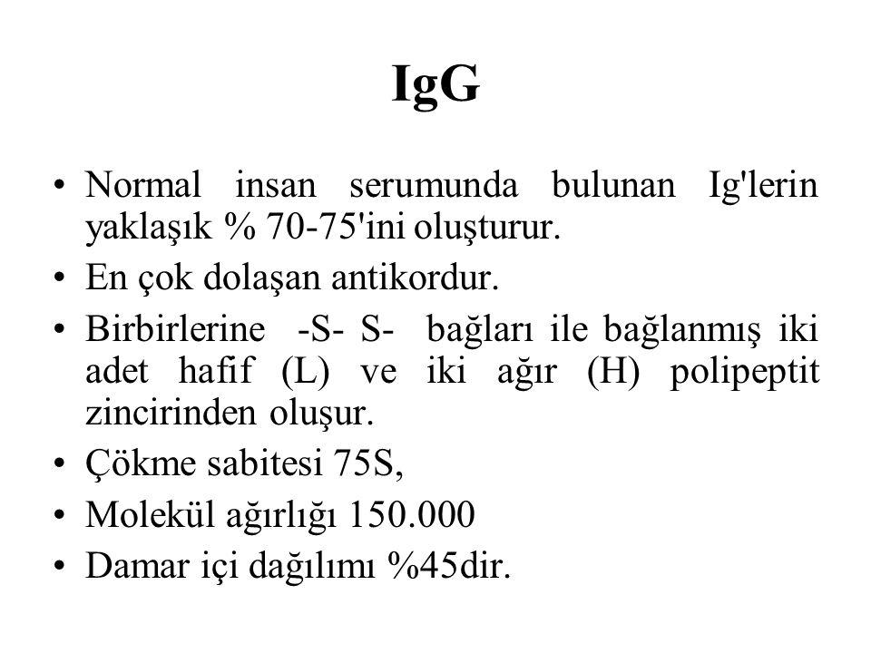 IgG Normal insan serumunda bulunan Ig'lerin yaklaşık % 70-75'ini oluşturur. En çok dolaşan antikordur. Birbirlerine -S- S- bağları ile bağlanmış iki a