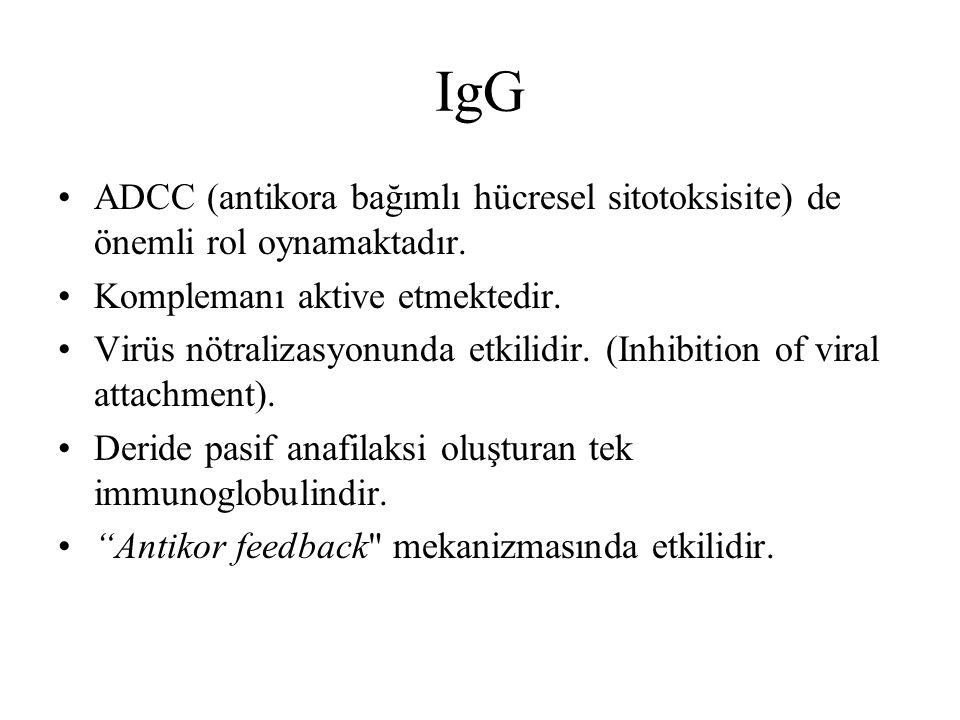 IgG ADCC (antikora bağımlı hücresel sitotoksisite) de önemli rol oynamaktadır. Komplemanı aktive etmektedir. Virüs nötralizasyonunda etkilidir. (Inhib