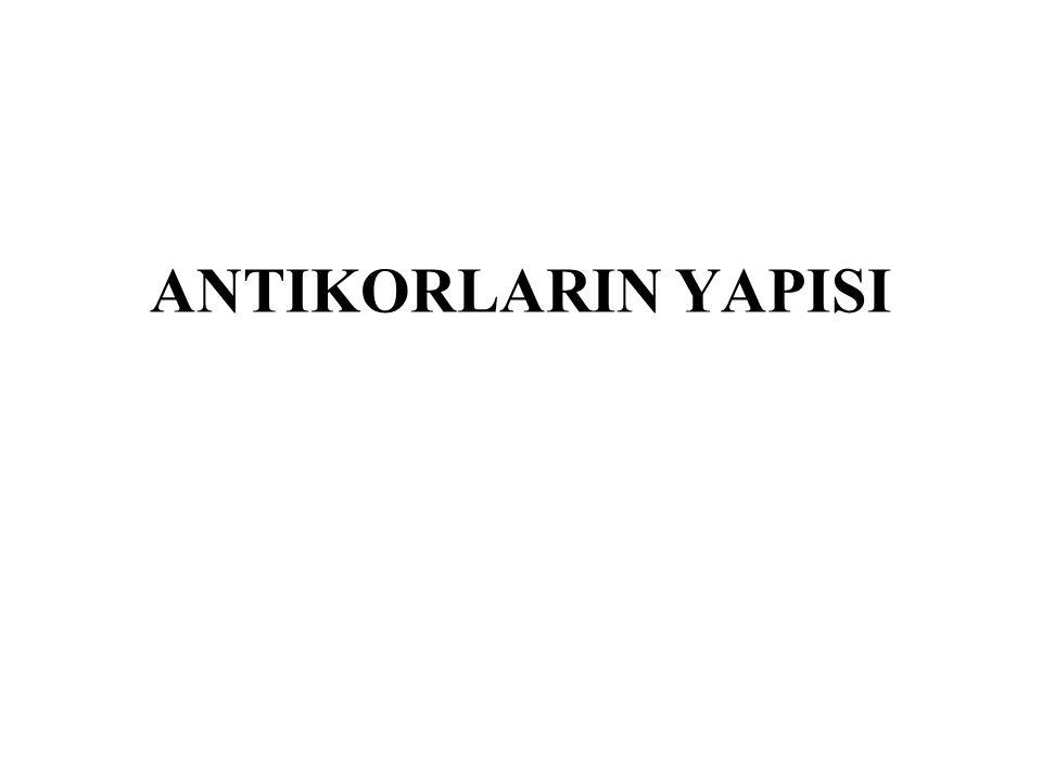 Antikorlar iki bölgeden oluşur Aminoterminal bölge– variable region: Değişken bir domain (ilmik) olup amino asit sekansı her antikorda farklıdır.