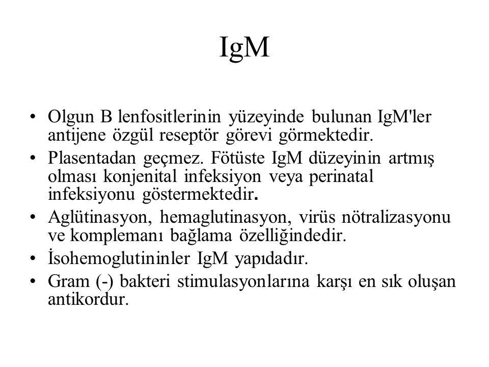IgM Olgun B lenfositlerinin yüzeyinde bulunan IgM'ler antijene özgül reseptör görevi görmektedir. Plasentadan geçmez. Fötüste IgM düzeyinin artmış olm