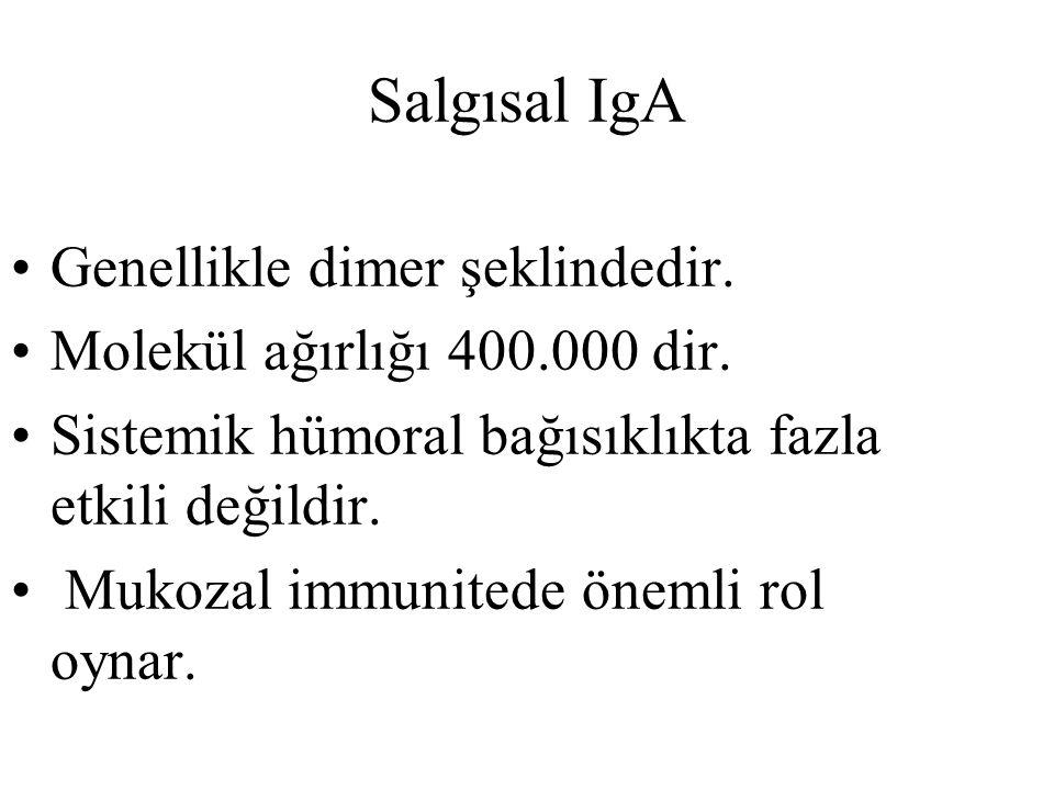 Salgısal IgA Genellikle dimer şeklindedir. Molekül ağırlığı 400.000 dir. Sistemik hümoral bağısıklıkta fazla etkili değildir. Mukozal immunitede öneml