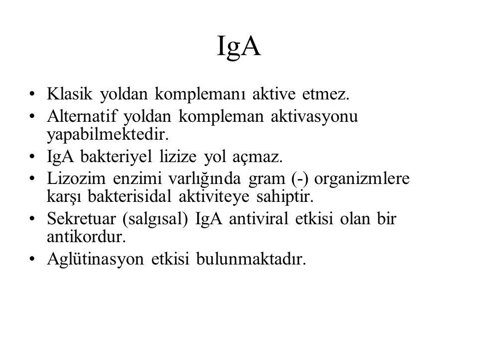 IgA Klasik yoldan komplemanı aktive etmez. Alternatif yoldan kompleman aktivasyonu yapabilmektedir. IgA bakteriyel lizize yol açmaz. Lizozim enzimi va