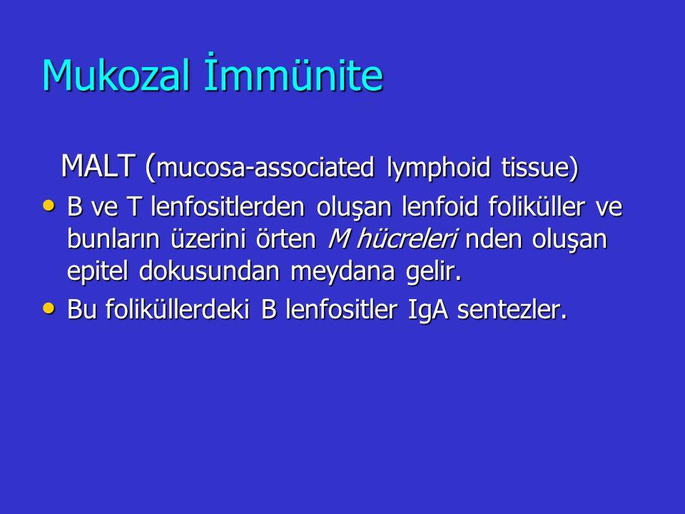 Hücresel immünitede meydana gelen değişiklikler Timik involüsyon: KI kaynaklı T hücre prekürsörlerinin olgunlaştığı ve farklılaştığı yer timustur.