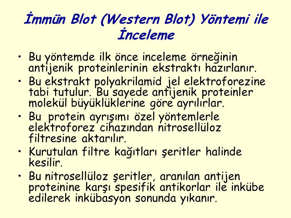 İmmün Blot (Western Blot) Yöntemi ile İnceleme Bu yöntemde ilk önce inceleme örneğinin antijenik proteinlerinin ekstraktı hazırlanır. Bu ekstrakt poly