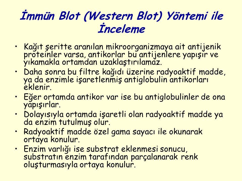 İmmün Blot (Western Blot) Yöntemi ile İnceleme Kağıt şeritte aranılan mikroorganizmaya ait antijenik proteinler varsa, antikorlar bu antijenlere yapışır ve yıkamakla ortamdan uzaklaştırılamaz.