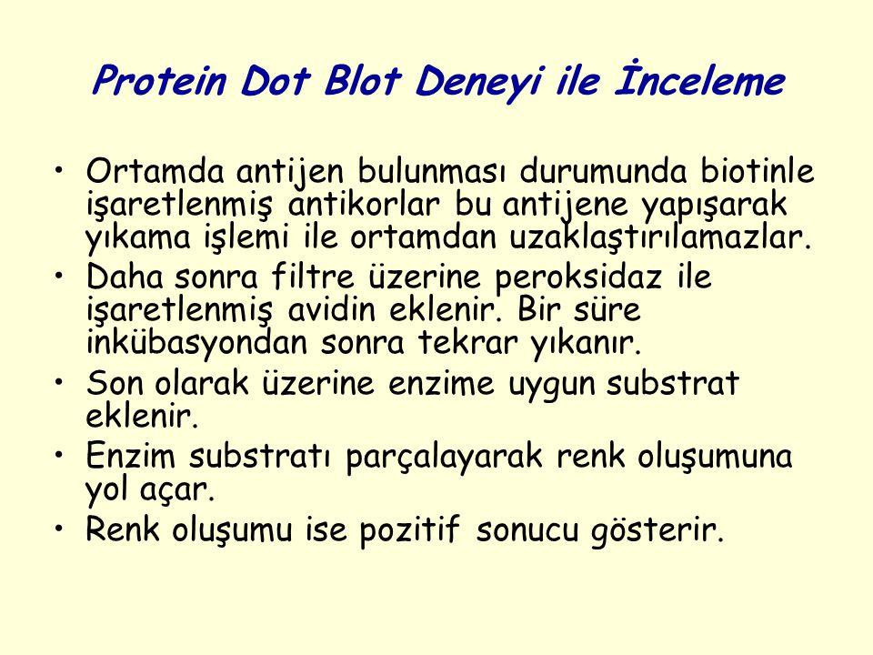 Protein Dot Blot Deneyi ile İnceleme Ortamda antijen bulunması durumunda biotinle işaretlenmiş antikorlar bu antijene yapışarak yıkama işlemi ile orta