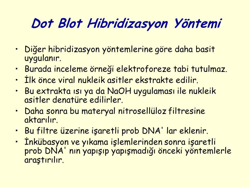 Dot Blot Hibridizasyon Yöntemi Diğer hibridizasyon yöntemlerine göre daha basit uygulanır. Burada inceleme örneği elektroforeze tabi tutulmaz. İlk önc