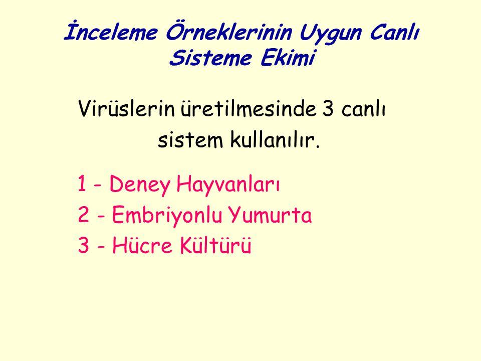 İnceleme Örneklerinin Uygun Canlı Sisteme Ekimi Virüslerin üretilmesinde 3 canlı sistem kullanılır. 1 - Deney Hayvanları 2 - Embriyonlu Yumurta 3 - Hü