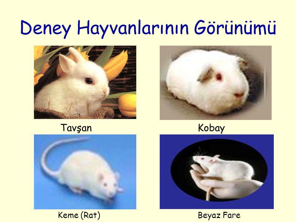 Deney Hayvanlarının Görünümü TavşanKobay Keme (Rat)Beyaz Fare