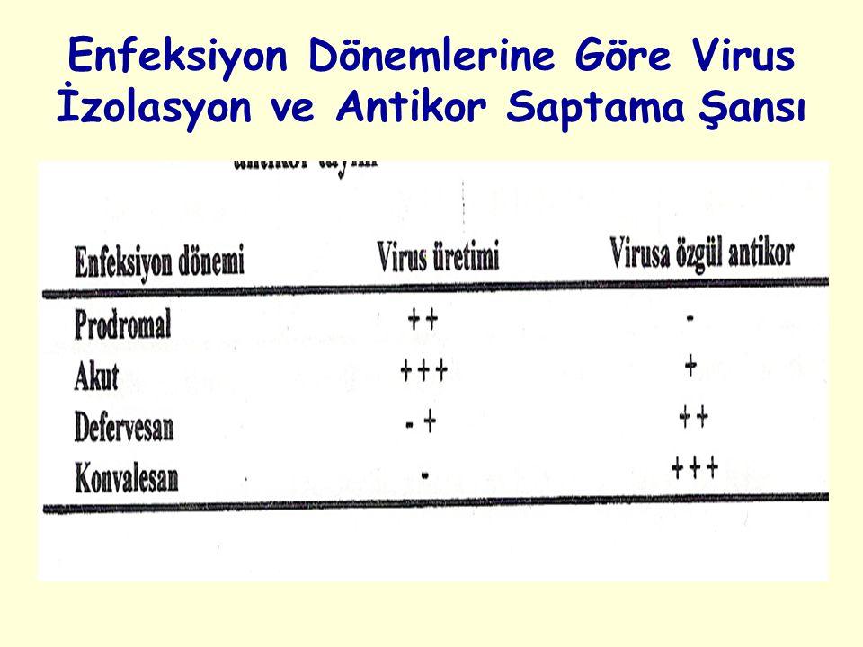 Enfeksiyon Dönemlerine Göre Virus İzolasyon ve Antikor Saptama Şansı
