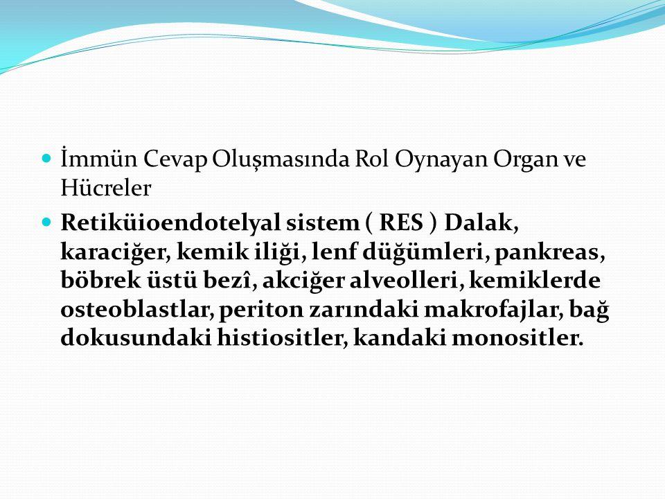 İmmün Cevap Oluşmasında Rol Oynayan Organ ve Hücreler Retiküioendotelyal sistem ( RES ) Dalak, karaciğer, kemik iliği, lenf düğümleri, pankreas, böbre