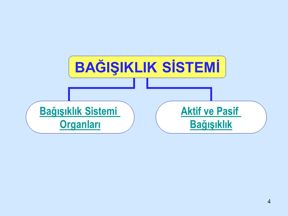3 İçindekiler Bağışıklık sistemi organları Aktif ve paif bağışıklık a-Aktif bağışıklık ve aşı b-Pasif bağışıklık ve serum