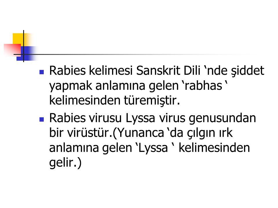 Rabies kelimesi Sanskrit Dili 'nde şiddet yapmak anlamına gelen 'rabhas ' kelimesinden türemiştir. Rabies virusu Lyssa virus genusundan bir virüstür.(