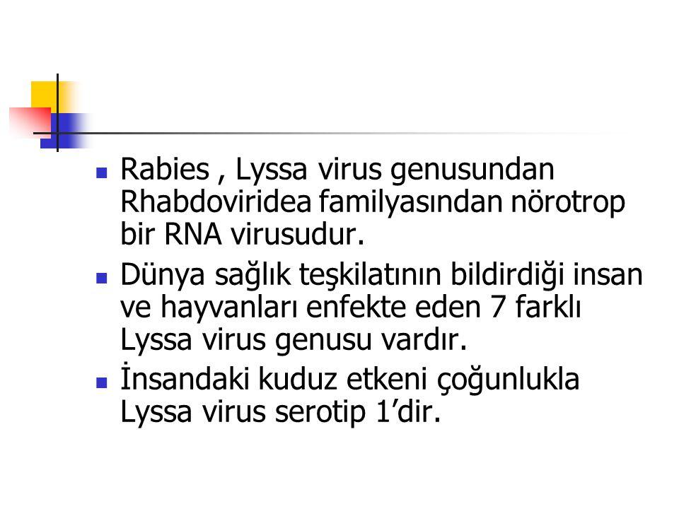Rabies, Lyssa virus genusundan Rhabdoviridea familyasından nörotrop bir RNA virusudur. Dünya sağlık teşkilatının bildirdiği insan ve hayvanları enfekt