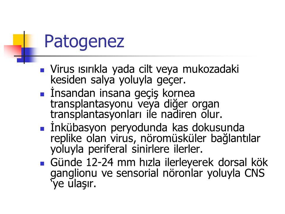 Patogenez Virus ısırıkla yada cilt veya mukozadaki kesiden salya yoluyla geçer. İnsandan insana geçiş kornea transplantasyonu veya diğer organ transpl