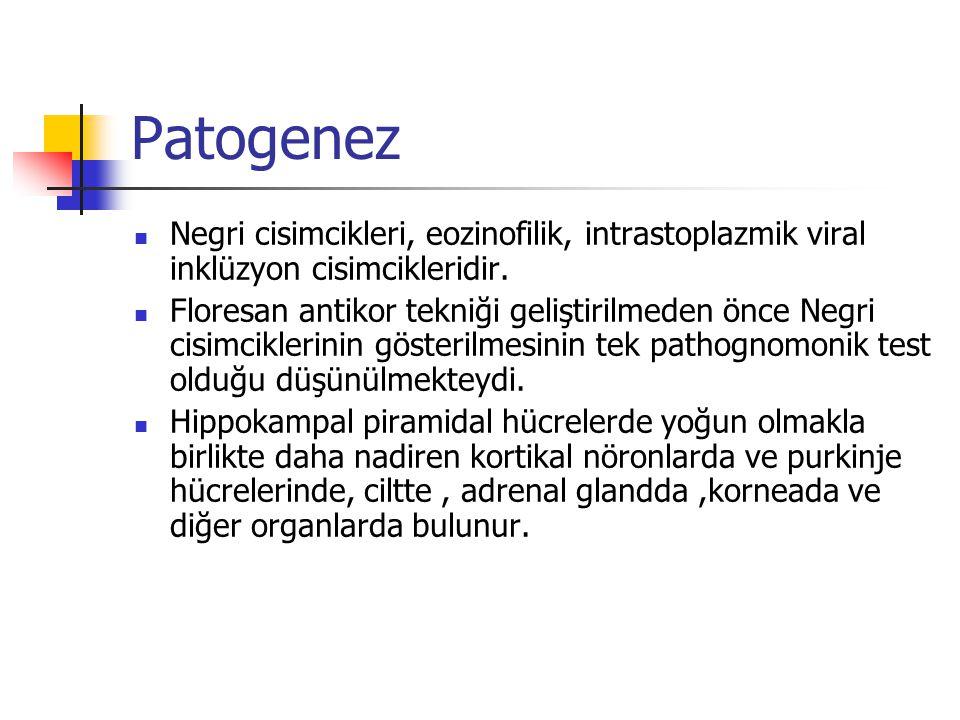 Patogenez Negri cisimcikleri, eozinofilik, intrastoplazmik viral inklüzyon cisimcikleridir. Floresan antikor tekniği geliştirilmeden önce Negri cisimc