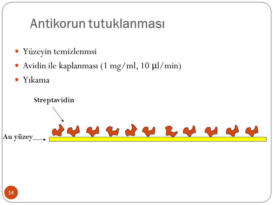 Antikorun tutuklanması Yüzeyin temizlenmsi Avidin ile kaplanması (1 mg/ml, 10 μ l/min) Yıkama Au yüzey Streptavidin 14