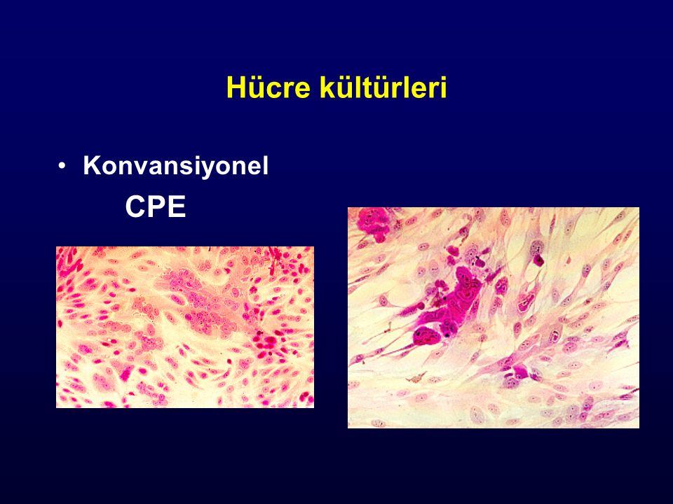 Hücre kültürleri Konvansiyonel CPE