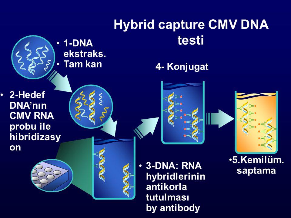Hybrid capture CMV DNA testi 1-DNA ekstraks.