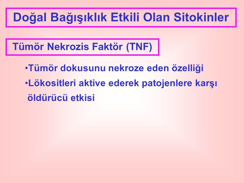 Doğal Bağışıklık Etkili Olan Sitokinler Tümör Nekrozis Faktör (TNF) Tümör dokusunu nekroze eden özelliği Lökositleri aktive ederek patojenlere karşı ö