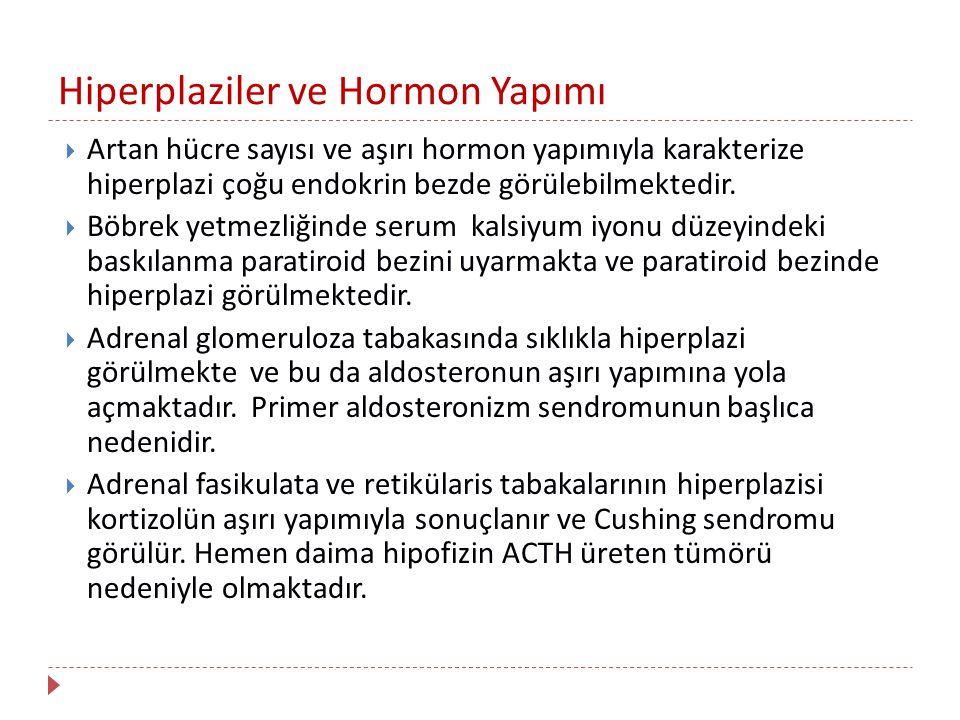 Hiperplaziler ve Hormon Yapımı  Artan hücre sayısı ve aşırı hormon yapımıyla karakterize hiperplazi çoğu endokrin bezde görülebilmektedir.  Böbrek y