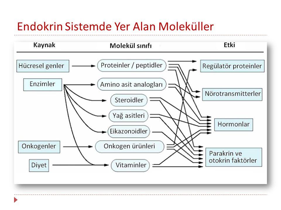 Endokrin Sistemde Yer Alan Moleküller