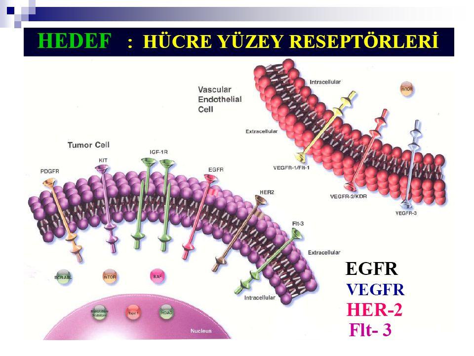 Trastuzumab (Herceptin) İnsan epidermal büyüme faktör reseptörü (HER-2) ne karşı hedeflenmiş monoklonal bir antikordur.