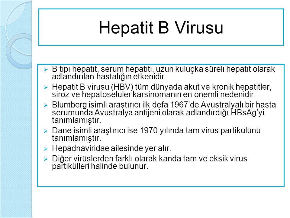 Hepatit B Virusu  B tipi hepatit, serum hepatiti, uzun kuluçka süreli hepatit olarak adlandırılan hastalığın etkenidir.  Hepatit B virusu (HBV) tüm