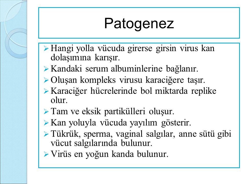 Patogenez  Hangi yolla vücuda girerse girsin virus kan dolaşımına karışır.  Kandaki serum albuminlerine bağlanır.  Oluşan kompleks virusu karaciğer