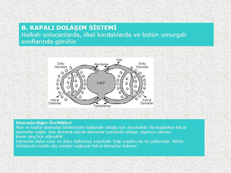 B. KAPALI DOLAŞIM SİSTEMİ Halkalı solucanlarda, ilkel kordalılarda ve bütün omurgalı sınıflarında görülür. Sistemin Diğer Özellikleri Atar ve toplar d