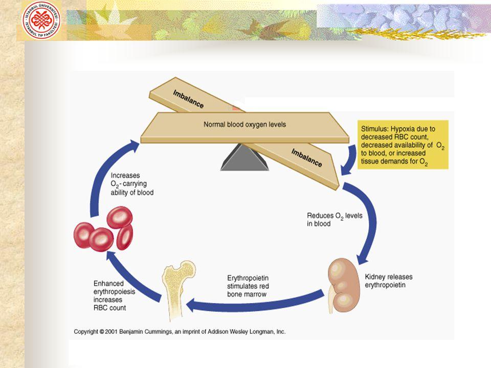 Eritrositin Gelişmesi İçin Gerekli (Hematopoetik) Maddeler 1).