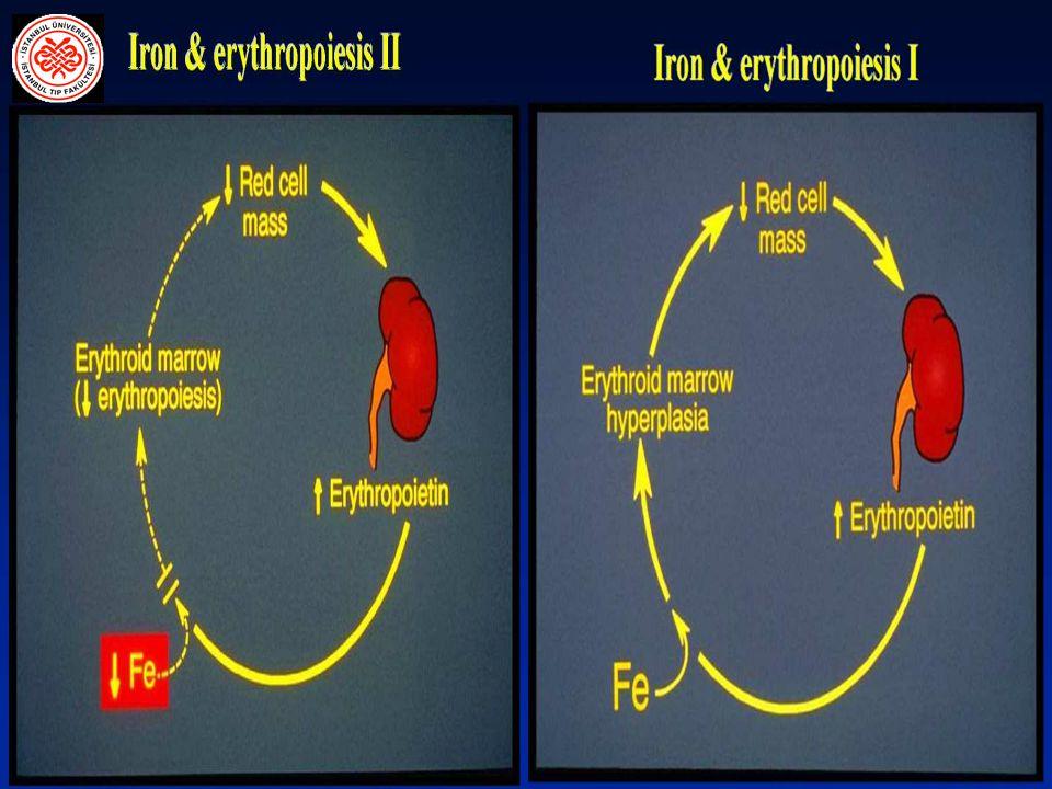 EPO'nun Kimyasal Yapısı EPO, Glikoprotein yapıda bir hormondur.