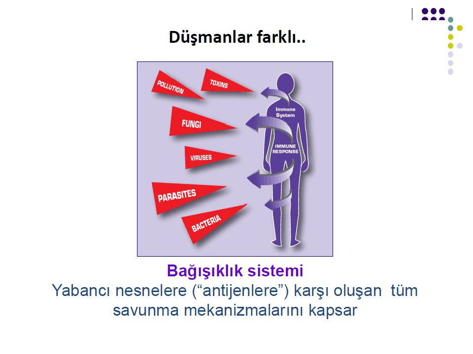 İmmunitede rol alan organlar 1.