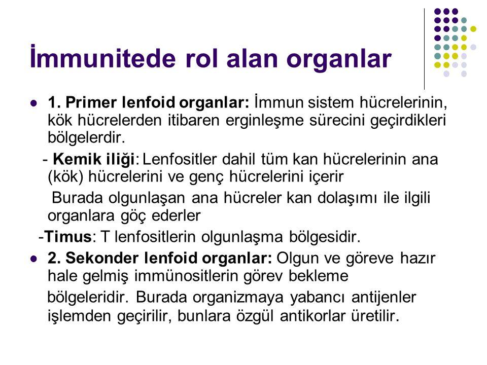 Dalak: Kandaki antijenlerin işlem bölgesidir.