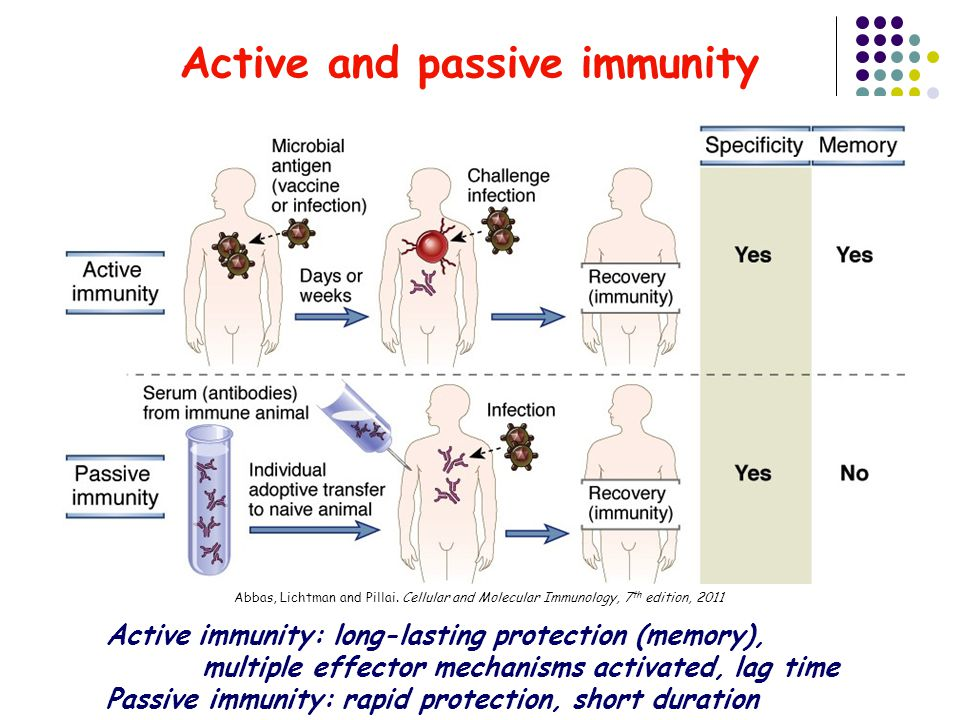 Active and passive immunity Active immunity: long-lasting protection (memory), multiple effector mechanisms activated, lag time Passive immunity: rapid protection, short duration Abbas, Lichtman and Pillai.