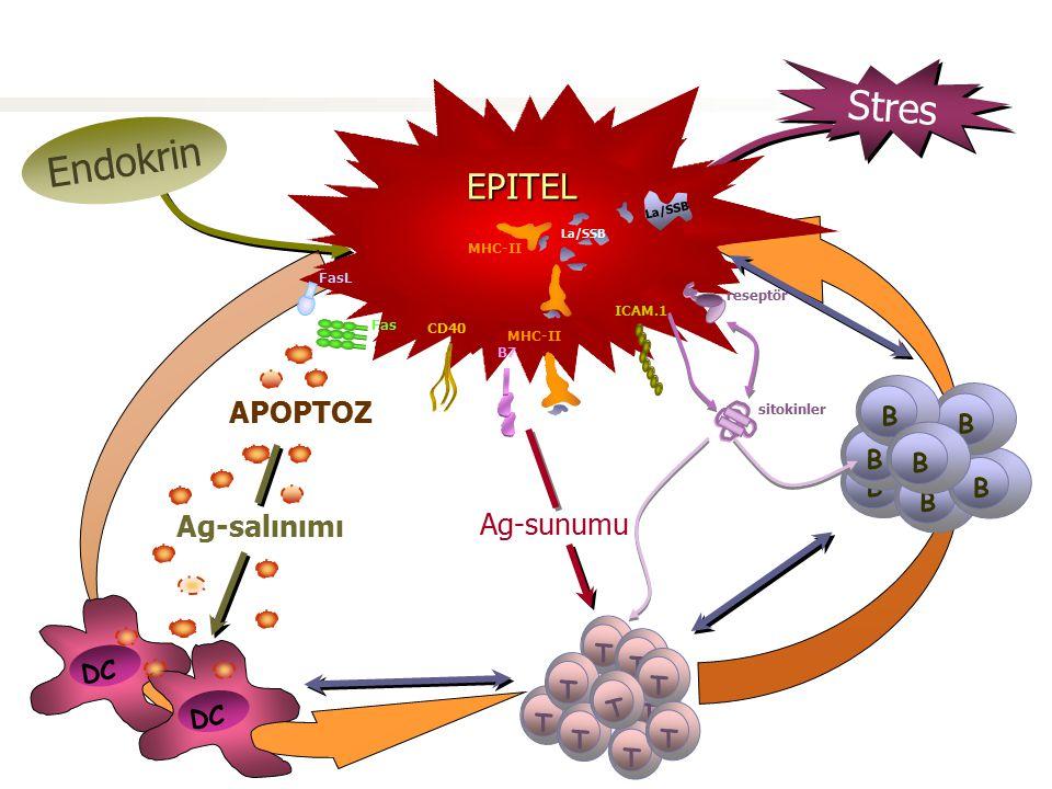 EPiTEL Endokrin Stres DC Ag-salınımı T T T T T T T T T Ag-sunumu B B B B B B EPİTEL Virus Genetik yapılanma CD40 APOPTOZ Fas FasL B7 T B sitokinler IC