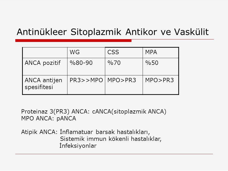 Antinükleer Sitoplazmik Antikor ve Vaskülit WGCSSMPA ANCA pozitif%80-90%70%50 ANCA antijen spesifitesi PR3>>MPOMPO>PR3 Proteinaz 3(PR3) ANCA: cANCA(si