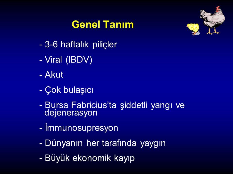 Genel Tanım - 3-6 haftalık piliçler - Viral (IBDV) - Akut - Çok bulaşıcı - Bursa Fabricius'ta şiddetli yangı ve dejenerasyon - İmmunosupresyon - Dünya