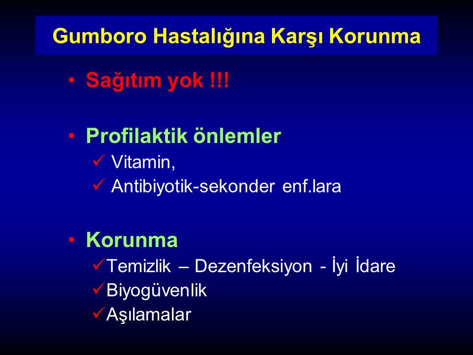 Gumboro Hastalığına Karşı Korunma Sağıtım yok !!! Profilaktik önlemler Vitamin, Antibiyotik-sekonder enf.lara Korunma Temizlik – Dezenfeksiyon - İyi İ