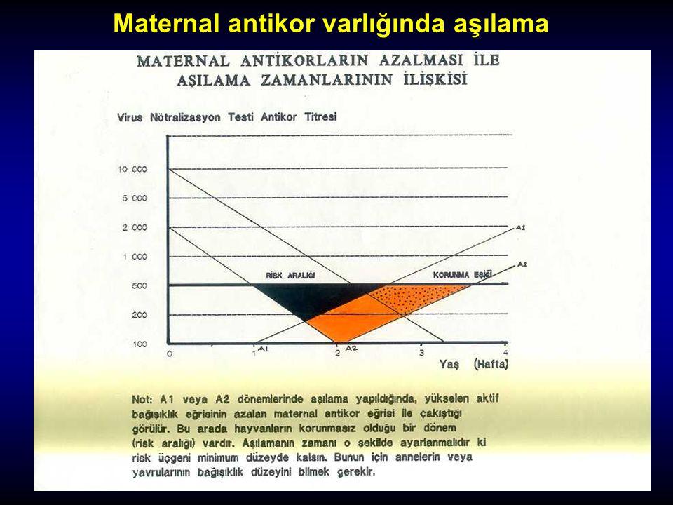 Maternal antikor varlığında aşılama