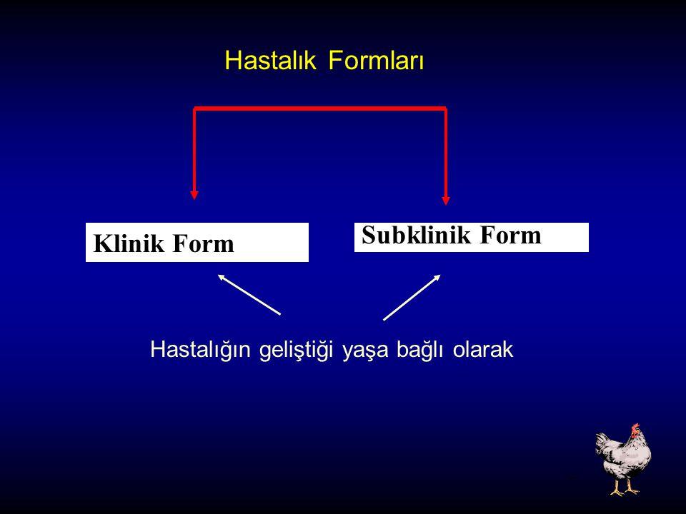 Hastalık Formları Klinik Form Subklinik Form Hastalığın geliştiği yaşa bağlı olarak